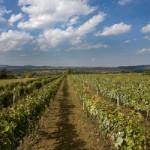 Botunjac Vinogradi