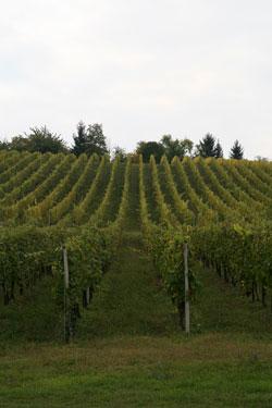 Eko-Vinogradarstvo