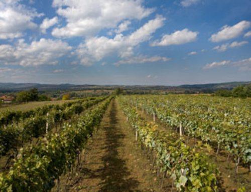 Novo vinarstvo Srbije: Četvrti deo